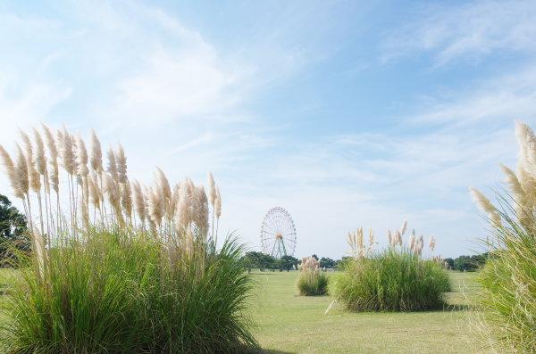 国営ひたち海浜公園