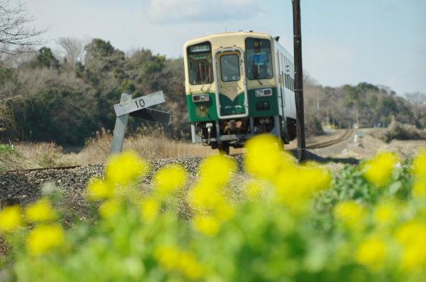 ひたちなか海浜鉄道 菜の花