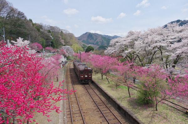 花桃まつり、わたらせ渓谷鉄道