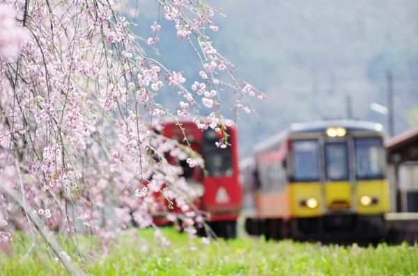 会津鉄道 芦ノ牧温泉駅 桜