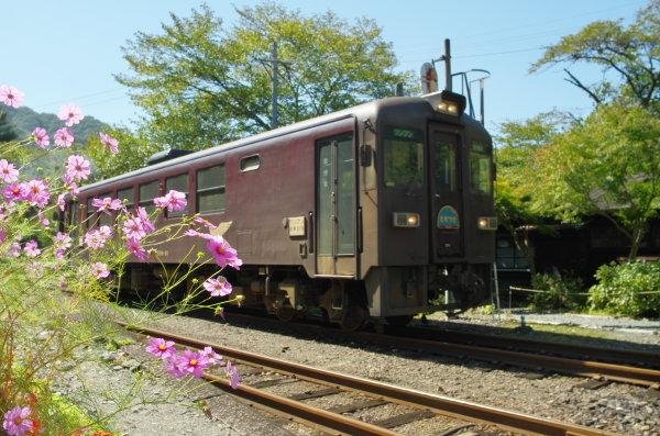 秋桜〜わたらせ渓谷鉄道