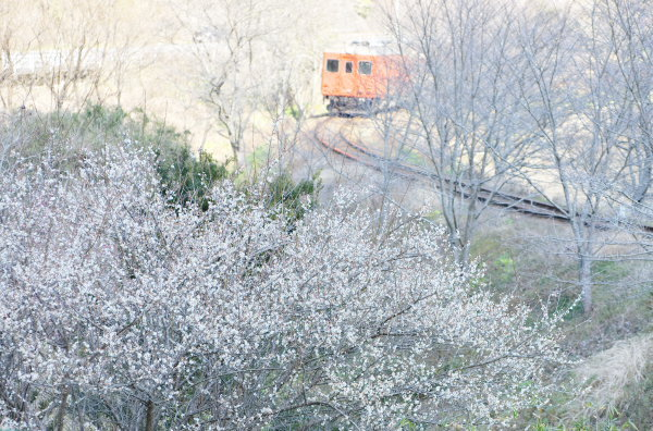 梅の花が咲く〜いすみ鉄道