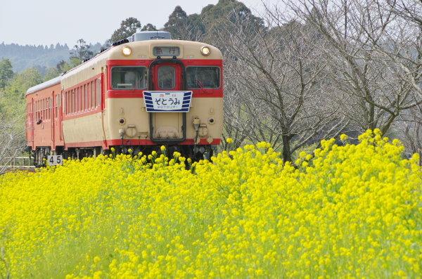 菜の花の季節〜いすみ鉄道