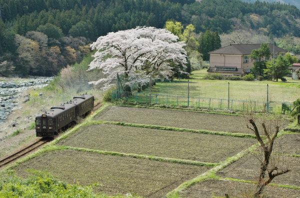 旧ひので小学校の桜、わたらせ渓谷鉄道