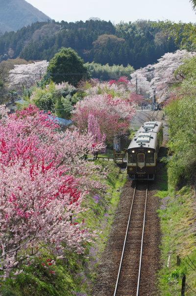 花桃祭り〜わたらせ渓谷鉄道