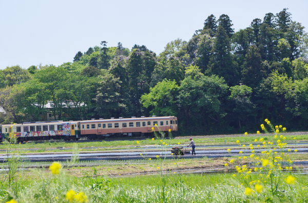 田植えの頃〜ひたちなか海浜鉄道