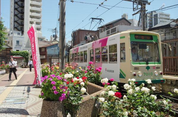 春バラ〜都電荒川線
