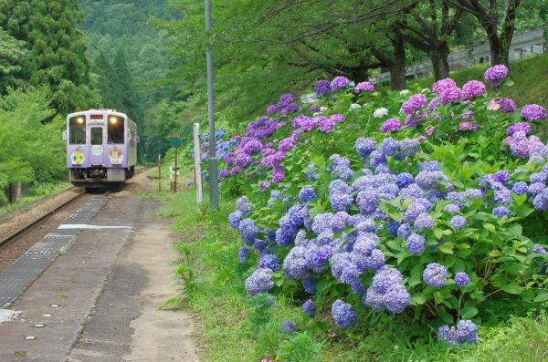 あじさい〜会津鉄道