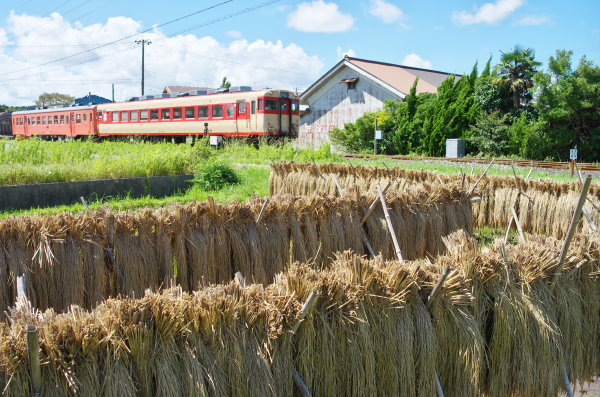 稲の天日干し〜いすみ鉄道