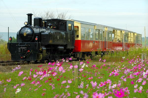 里山トロッコとコスモス〜小湊鉄道