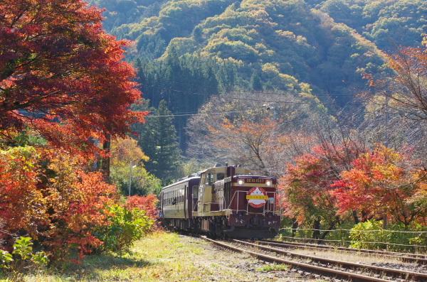 紅葉燃ゆ〜わたらせ渓谷鉄道