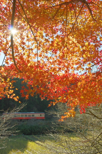 紅葉を求めて〜いすみ鉄道