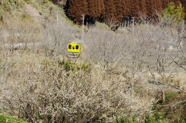 梅といすみ鉄道
