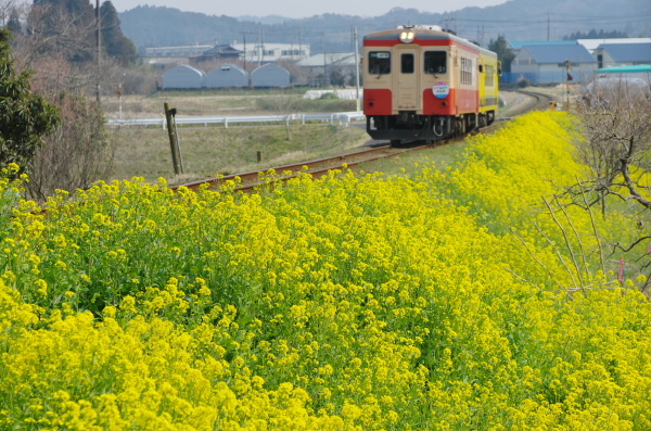 いすみ鉄道〜菜の花