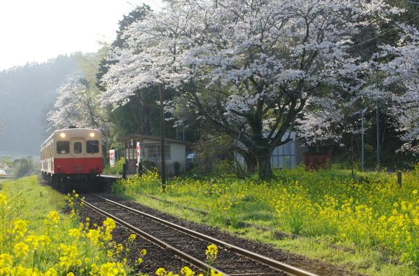 桜〜上総大久保駅