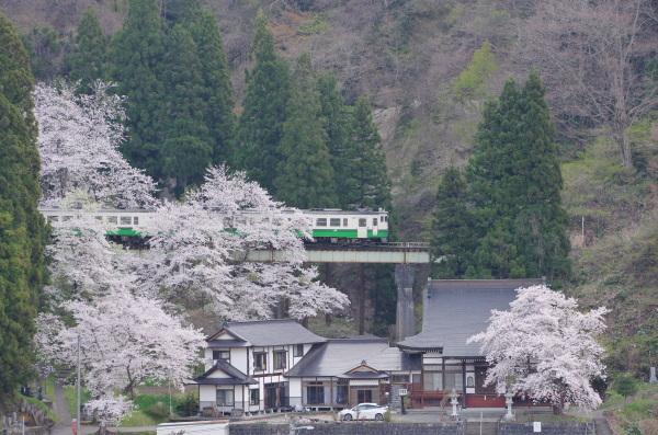 只見線に乗って桜見物
