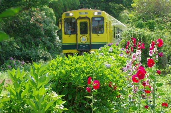 紫陽花〜いすみ鉄道