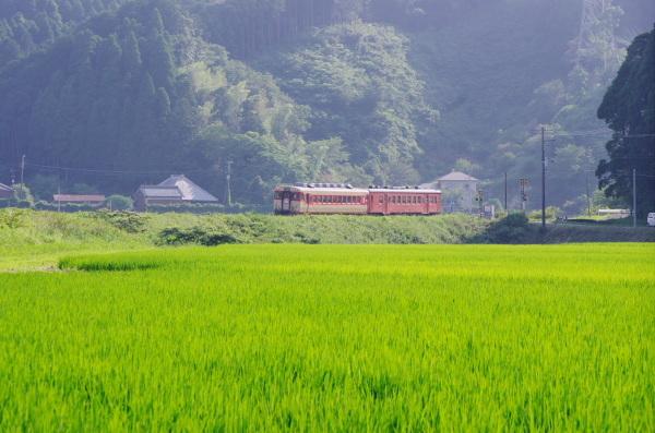 夏のいすみ鉄道