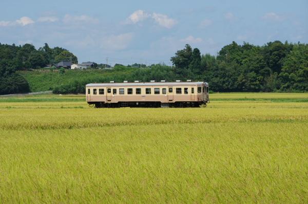 実りの頃の風景〜ひたちなか海浜鉄道
