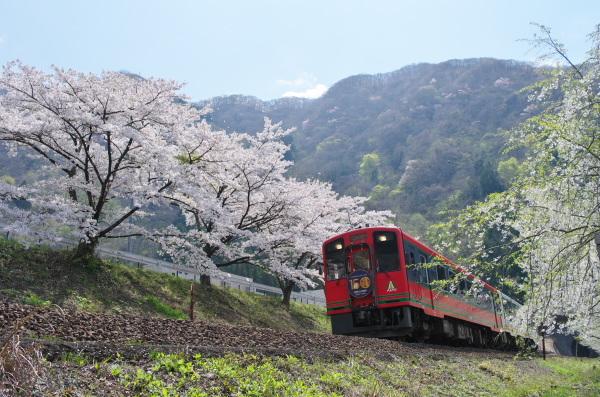 桜・会津鉄道の旅〜大川ダム公園