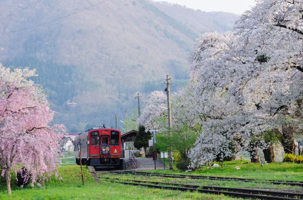 桜・会津鉄道の旅〜芦ノ牧温泉