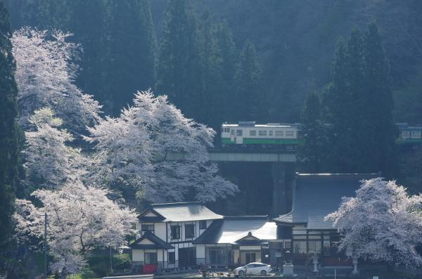 桜〜只見線