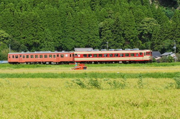 稲刈りの季節〜いすみ鉄道
