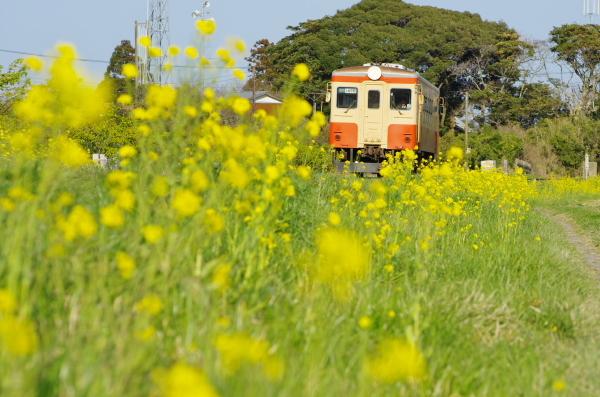 菜の花の頃〜いすみ鉄道