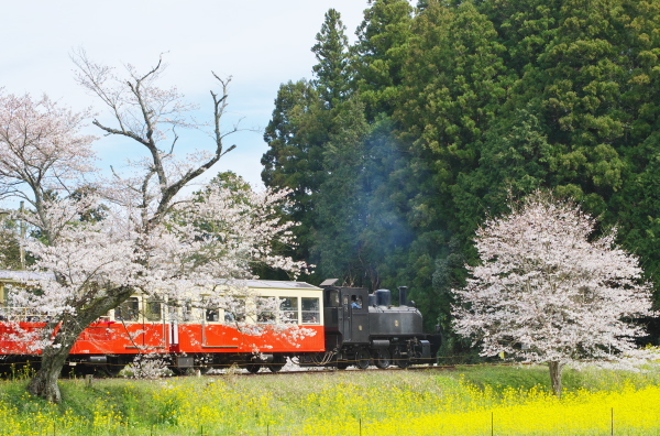 飯給の春〜桜