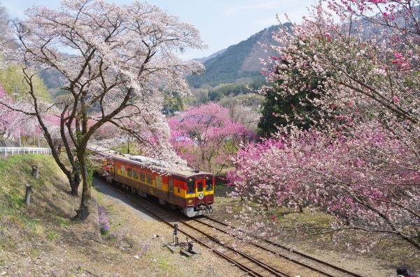 花桃まつり〜神戸