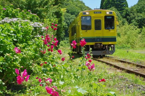 あじさい〜いすみ鉄道